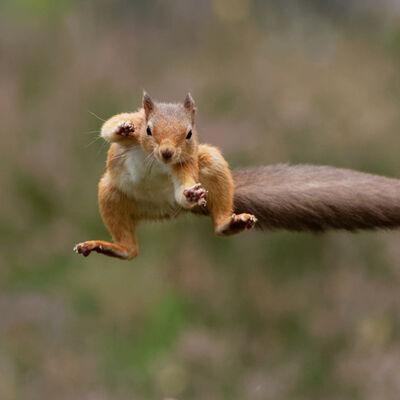 Flying salute!