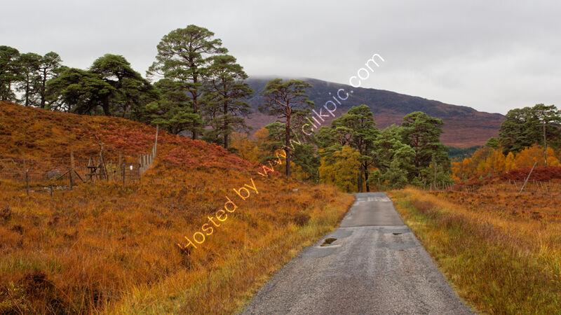 Autumn colours 2, Inveroran,