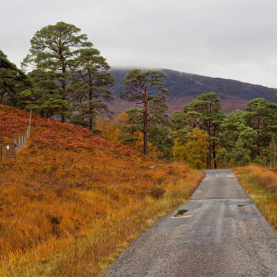 Autumn colours 2, Inveroran,