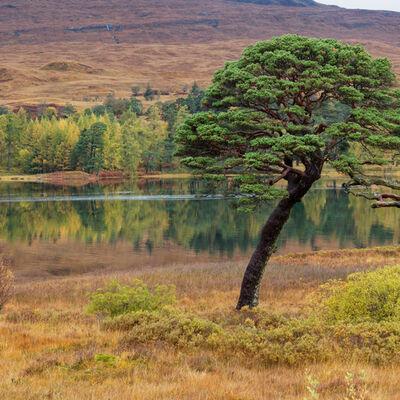 Autumn colours, Loch Tulla