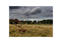 Stag and Rugby Posts, Richmond Park