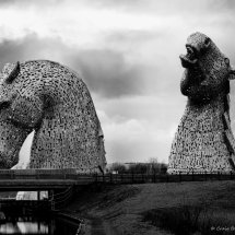 Black & White Kelpies