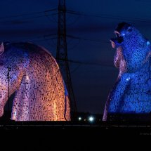 Pink & Blue Kelpies