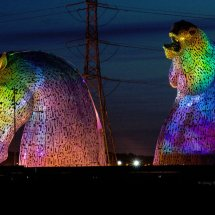 Tropical Kelpies