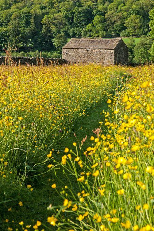 Gunnerside Meadow