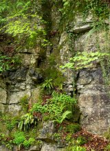 Hudswell quarry face
