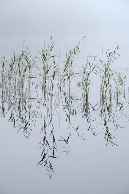Knapdale Reeds