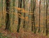 Millington Autumn