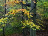 Millington Woods