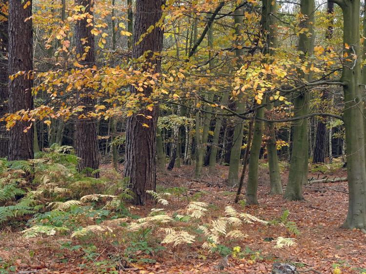 Sherwood Autumn