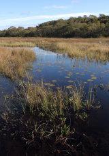 Taynish Reserve