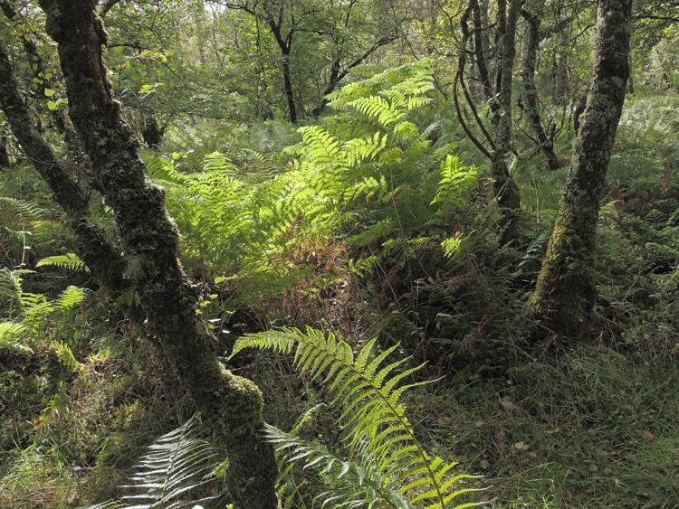 Taynish Woodland