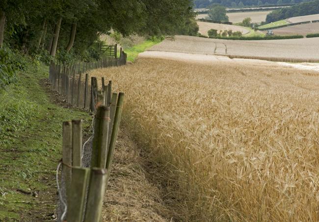 Wolds Harvest