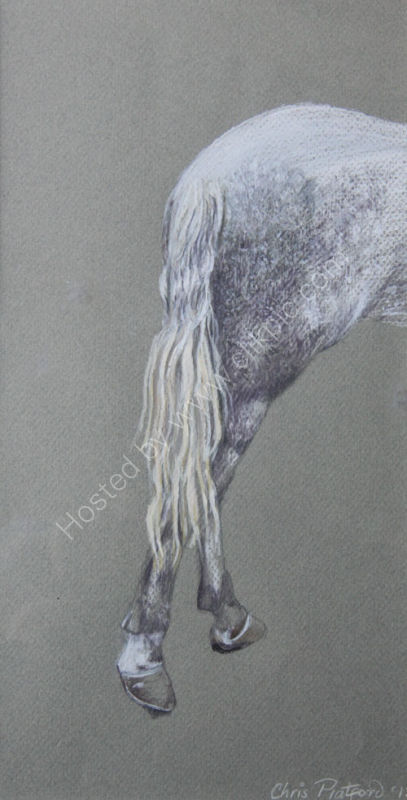HORSE'S TAIL