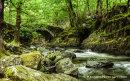River Artro, near Cwn Bychan