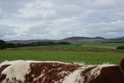 roan landscape