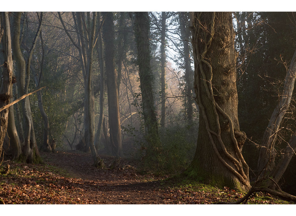 Dixter Woods early morning