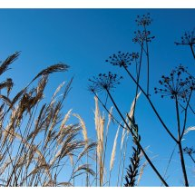 Grasses and Seedheads