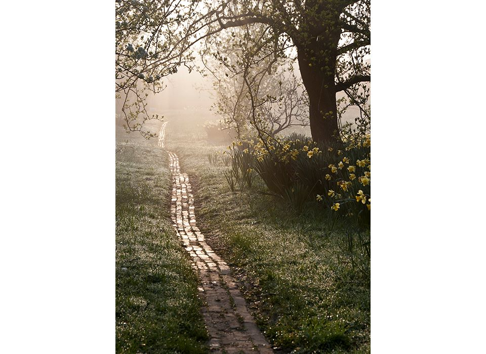 The Orchard Path at Sunrise