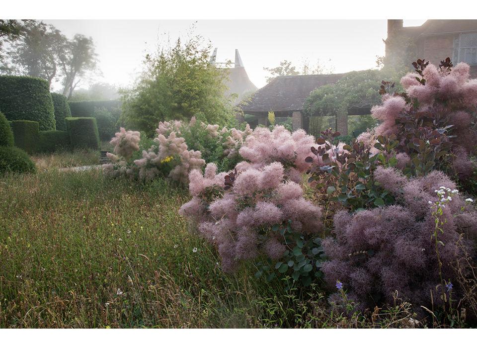 Topiary Lawn