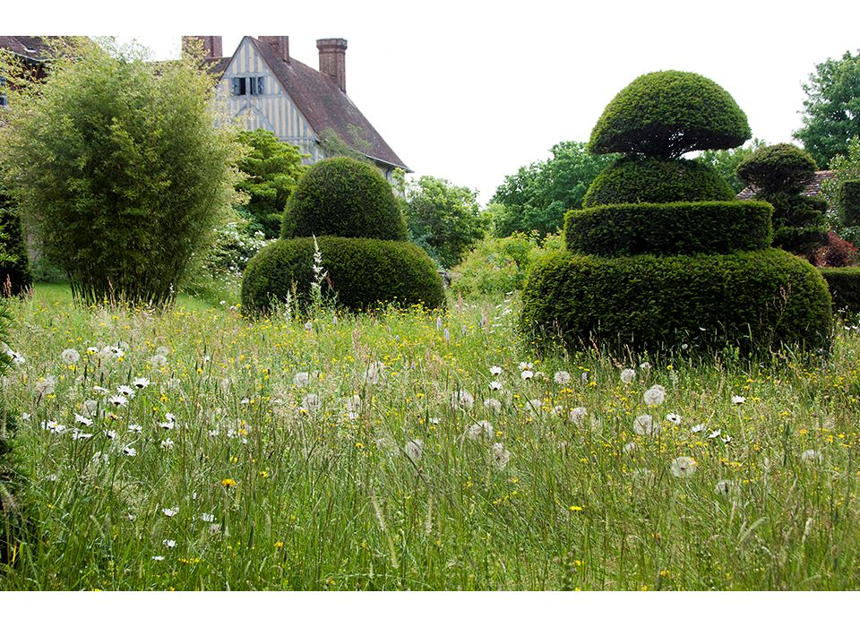 Topiary Lawn with Dandelions