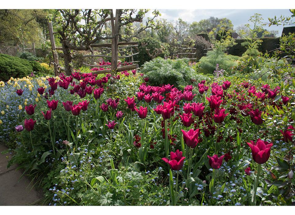Tulips in the High Garden
