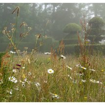Wild Flowers in the Topiary Lawn