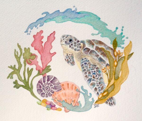 The Turtle, Sea & Seashells