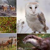 Wildlife on Exmoor