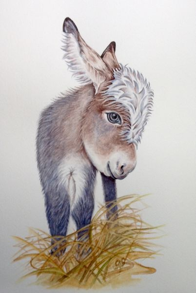 Conker the Donkey