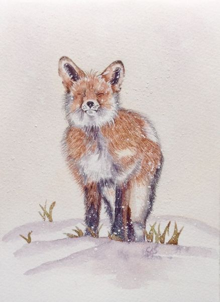 Nutmeg the little Fox