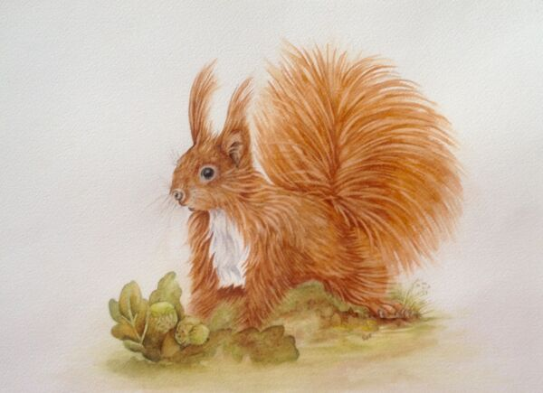 Red Squirrel - SOLD OUT