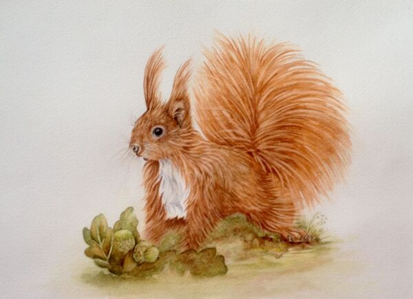 Radish the Red Squirrel - SOLD