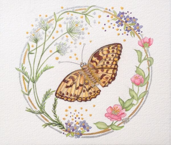 Cow Parsley & High Brown Butterfly
