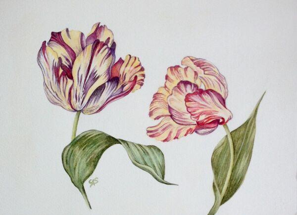 Old English Tulips