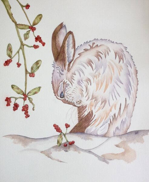 Snowberry the Brown Hare in Winter