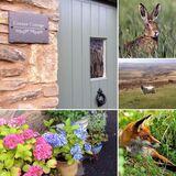 Cottage & Flowers