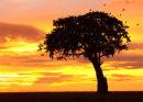 Sunrise, Maasai Mara