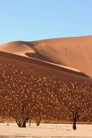 Landscape, Dead Vlei, Namibia