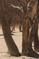 Landscape, Deadvlei, Namibia