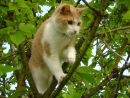 Travis doing a bit of tree climbing