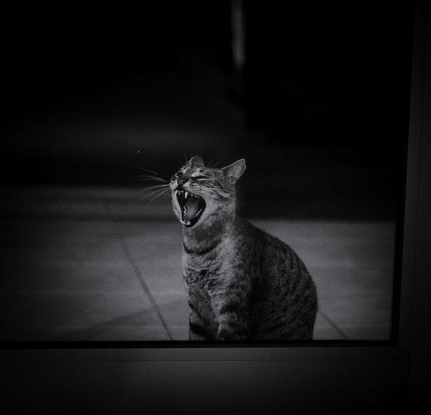 House cat, Fuerteventura