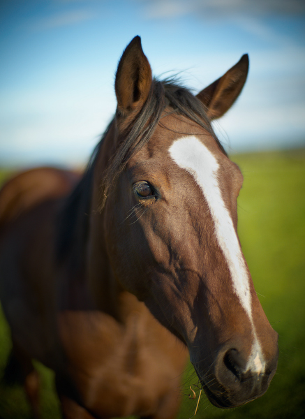 Horse portrait, Moenchshof