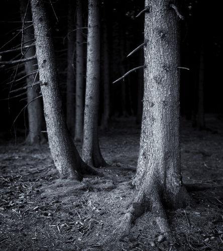 Treescape, Locherhof