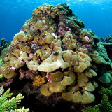 Christmas tree coral formation