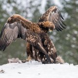 Eagles sparring