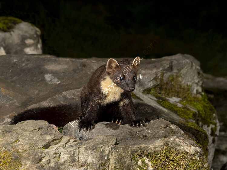 Image for the month for September young  pinemartin