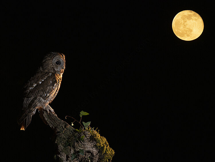 Image of the month for March Tawny and red moon