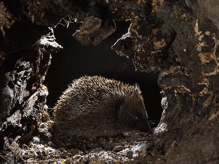 Image of the month for September hedgehog and spiders