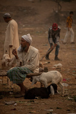 The Goat Market